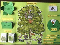 Unser erstes eigenes Lapbook, zum Thema Wald! 🌳🌲🍃 Komplett mit dem Worksheet Crafter gemacht. Im Blogartikel gibts das Lapbook zum…