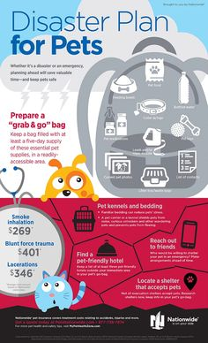 Natural disasters impact all family members, including pets, which is why Nationwide created a Natural Disaster Pet Safety Guide. Get pet safety tips now. Hurricane Preparedness, Emergency Preparedness Kit, Emergency Preparation, Survival Prepping, Emergency Binder, Emergency Water, Survival Shelter, Emergency Response, Homestead Survival