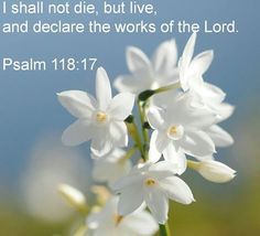 Psalm 118:17