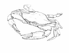 Atlantic Blue Crab - Andrew Leach Projects
