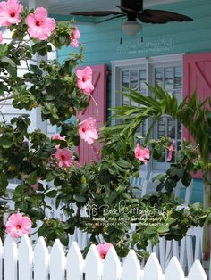 Island Porch Perfection - I love the turquoise house and the pink shutters! Cottage Porch, Cottage Exterior, Cozy Cottage, Coastal Cottage, Cottage Homes, Coastal Decor, Beach Cottage Style, Beach Cottage Decor, Coastal Style