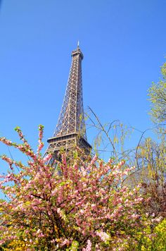 Oh, la Tour Eiffel  with her crinolines of pink, fully dressed for spring ----Paris and Beyond
