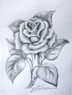 Flower Drawings Tips Single rose - pencil drawing Love Drawings, Drawing Faces, Drawing Sketches, Art Drawings, Drawings Of Flowers, Sketching, Plant Drawing, Painting & Drawing, Pencil Art
