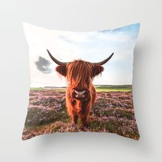 Cow throws, holy cow! @Paisley Prints Online society6 page http://society6.com/product/highlander-b23_pillow#25=193&18=126