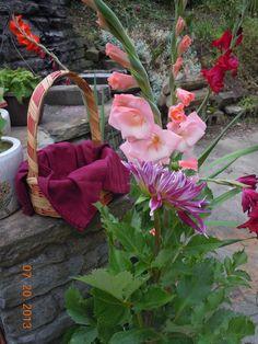 In our courtyard, we grew gladiolas, chrysanthemums and verbaniums.