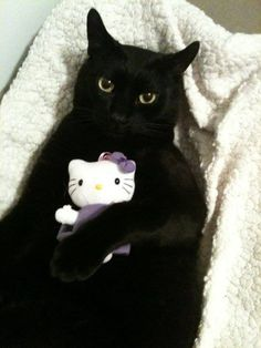 Hello!  So you still think that black cats are evil?  NOT