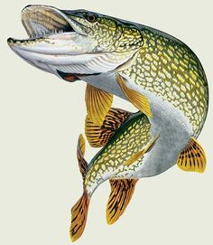 Fishing can be a great stress reliever. Find out more about fishing as a stress relieve, including tips on catching fish and staying safe. Pike Fishing, Best Fishing, Fishing Tips, Fly Fishing, Treasure Games, Fishing Magazines, Garden Organization, Fish Quilt, Fish Drawings