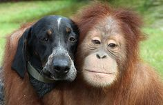 These two were featured on a Nat. Geo. show and they truly love each other.  We could learn from them.