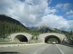 Wildlife Crossing Bridge on Trans Canada Highway