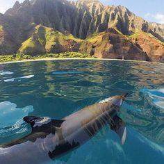 A dolphin swimming in Na Pali Coast, Kauai Island - Hawaii. Photo by HIDrivePhoto By Chris Howard - Beautiful Amazing World Kauai Hawaii, Hawaii Usa, Hawaii Vacation, Hawaii Travel, Dream Vacations, Vacation Spots, Maui, Hawaii Hikes, Hawaii Ocean