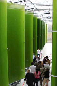 Austria putting the wraps on Photobioreactor #Algae project