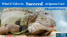 #Adoption Tips for Reptiles! What it Takes to Succeed at Iguana Care #ReptileCare