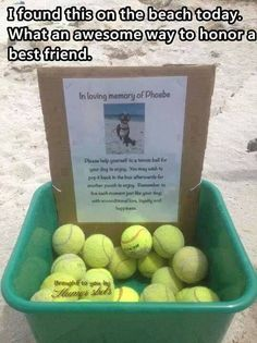 In memory of a doggy!