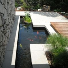 Look how these colorful koi pop against the minimalist design!