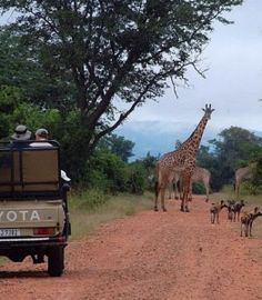 Guided Safaris ook into an exclusive bush camp, in or adjoining one of the National Parks. Get wined and dined and pampered in tasteful bush style and Safari Wedding, Safari Chic, In And Out Movie, Out Of Africa, Game Reserve, Safari Animals, African Safari, Go Camping, Dream Vacations