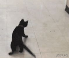 """Kitty """"jumping"""" to catch the ping pong ball. Good to see my cat isn't the only one that does this."""