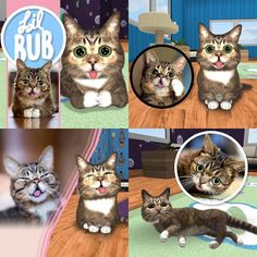 TREAT YOSELF this Valentines Day and get your very own Virtual BUB to take care of. Available for iOs and Android at the link in BUB's bio or athttp://ift.tt/1OeebYZ by iamlilbub