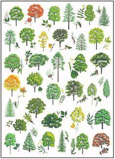 Tree Identification | Outside Duluth