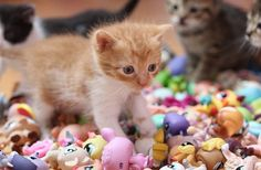 Cats approve lps