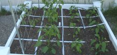 Square foot planting:  Here is a chart of plants and how many to plant per square. See below for explanations on how to calculate and sample pictures.