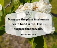 Proverbs 19:21 Proverbs 19, Share My Life, Human Heart, Program Design, Natural Health, Bible Verses, Purpose, About Me Blog, 21st