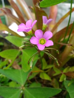 Little flower <3