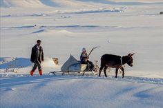 Van'ın Çaldıran ilçesinde çetin kış koşulları devam ediyor..  Kentte etkili olan kar yağışının ardından hava sıcaklığının eksi 20 derece kadar düştüğü Çaldıran ilçesinde, vatandaşlar günlük işlerini zor şartlar altında sürdürüyor. Günün ilk ışıklarıyla başlayan ve havanın kararmasına kadar devam eden zorlu mesaide, bazı vatandaşlar yaz aylarında hayvanları için depoladığı otları eşek arabalarıyla taşıyarak kar üstünde koyunlarına yediriyor.. FOTOĞRAF: ALİ İHSAN ÖZTÜRK ANADOLU AJANSI.