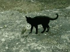 """Share this """"Cat and Owl Friends"""" animated gif image with everyone. Gif4Share is best source of Funny GIFs, Cats GIFs, Dog GIFs to Share on social networks and chat."""