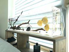 beautiful freshwater discus aquarium - New Bildhaft Pins Diskus Aquarium, Biotope Aquarium, Tropical Fish Aquarium, Nature Aquarium, Aquarium Design, Planted Aquarium, Aquarium Ideas, Marine Aquarium, Discus Tank