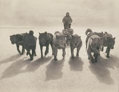 Huskies pulling sledge by State Library of New South Wales collection, via Flickr