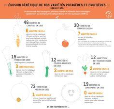 De 73variétés de melons à 1 seule en 2014… Comment en est-on arrivé là ? | Mr Mondialisation