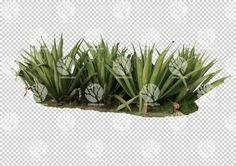 Barbados Aloe Vera cutout by Gobotree: