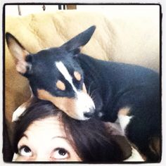 Basenji trap- they will also do it to your feet
