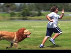 LION PRANK. Guy turns his Dog into a Lion.   Memes, Videos and Comedy from Denver to the World - Comedy 103.1