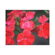 Red wet flower photo canvas