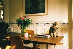 polaroids and a kitty