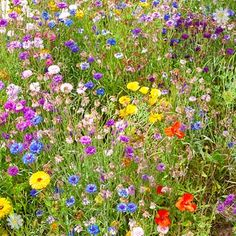 huge Butterfly & Bee Booster Seed Carpet 2M x 48cm at YouGarden
