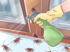 How to Get Rid of Roaches - DIY. A simple and effective homemade way to lure and trap roaches. I hope I never have to reference any of this. Home Remedies For Roaches, Cleaning Solutions, Cleaning Hacks, Roach Killer, Weed Killer, Homemade Cleaning Products, Household Chores, Household Tips, Cleaners Homemade