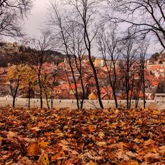 Very Autumn in Romania #travel #instatravel #travelgram #wanderlust #worlderlust #beautifuldestinations #natgeotravelpic #worldcaptures #ig_worldclub #igworldclub #igro #ig_romania #romania #brasov