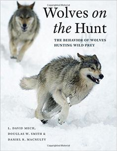"Read ""Wolves on the Hunt The Behavior of Wolves Hunting Wild Prey"" by L. David Mech available from Rakuten Kobo. The interactions between apex predators and their prey are some of the most awesome and meaningful in nature—displays of. Arctic Hare, Wolf Book, Musk Ox, Apex Predator, Predator Hunting, Animal Drawings, Mammals, Behavior, Funny Animals"