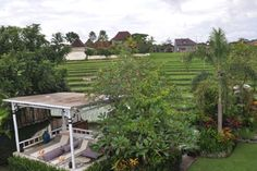 The best area to enjoy the rice field view #bali #ricefields #villa #rental #house #view #luxury #nature