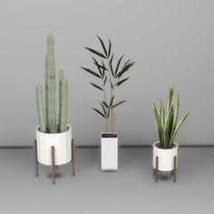 Plants - Leosims