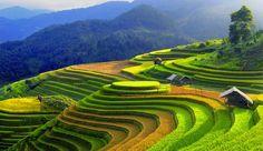 Du Lịch Sapa Ngày Tết 2N1D Đi Ô Tô | Lữ Hành Xanh Việt Nam