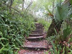 8. Ravine Gardens State Park, Palatka -- Hikes everyone should go on in Florida.