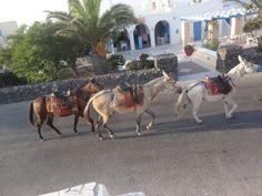 Fotografía: Paulo Portugal Mykonos, Santorini, Portugal, Horses, Animals, Greek Isles, Athens, Cruise, Greece