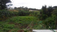 池間解体/裏の畑。弊社社長のご友人たちが耕しております。 ジャガイモとかは普通ですが、ニンニク葉は沖縄以外の人には珍しいかもです。