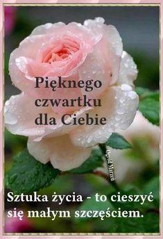 Good Morning, Flowers, Plants, Bom Dia, Buen Dia, Bonjour, Flora, Plant, Royal Icing Flowers