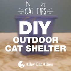 Outdoor Cat Shelter Options | Insulated & Heated Feral Cat House Ideas