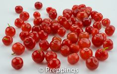 Red Huckleberry - Search by flavors, find similar varieties and discover new uses for ingredients @ preppings.com