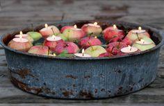 Apples, fall 2014
